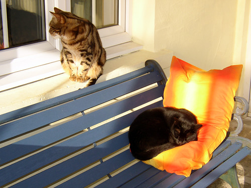 cats-in-the-conservatory