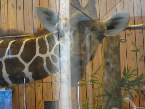 Det Zoo 112908_0039