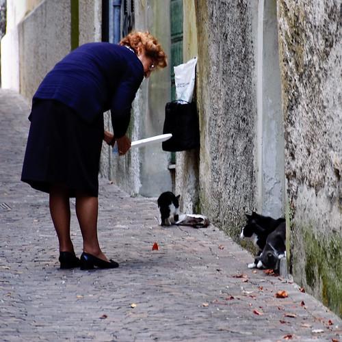 Charity for il gatti