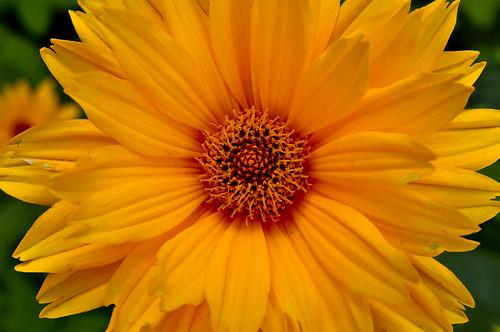 Flower or Sun?