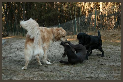 Valéas and Eiko dominating Erynn