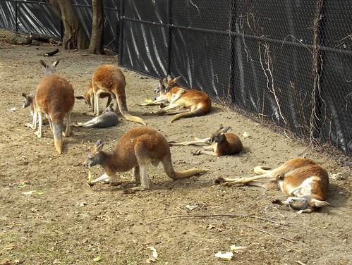 Det Zoo 031508_0026