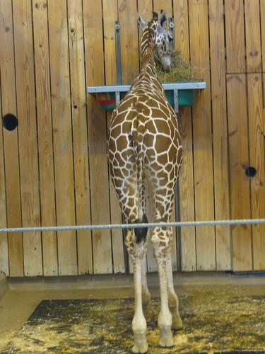 Det Zoo 112908_0048