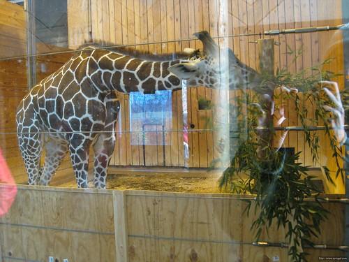 Det Zoo 112908_0038