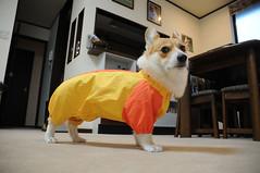 20080704coco_raincoat
