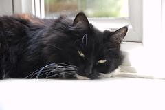 Sleeeeeepy cat