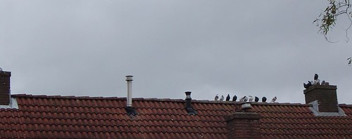 duiven