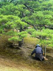 Gardener in Nijo-jo gardens