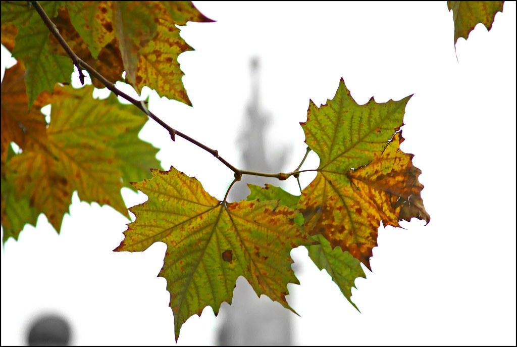 Paris leaves 3