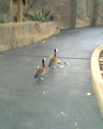 Det Zoo 030808_0005
