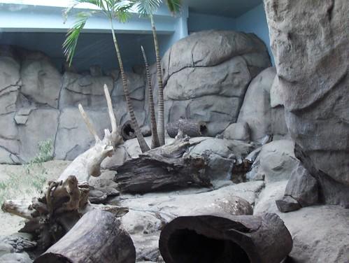 Det Zoo 072808_0020