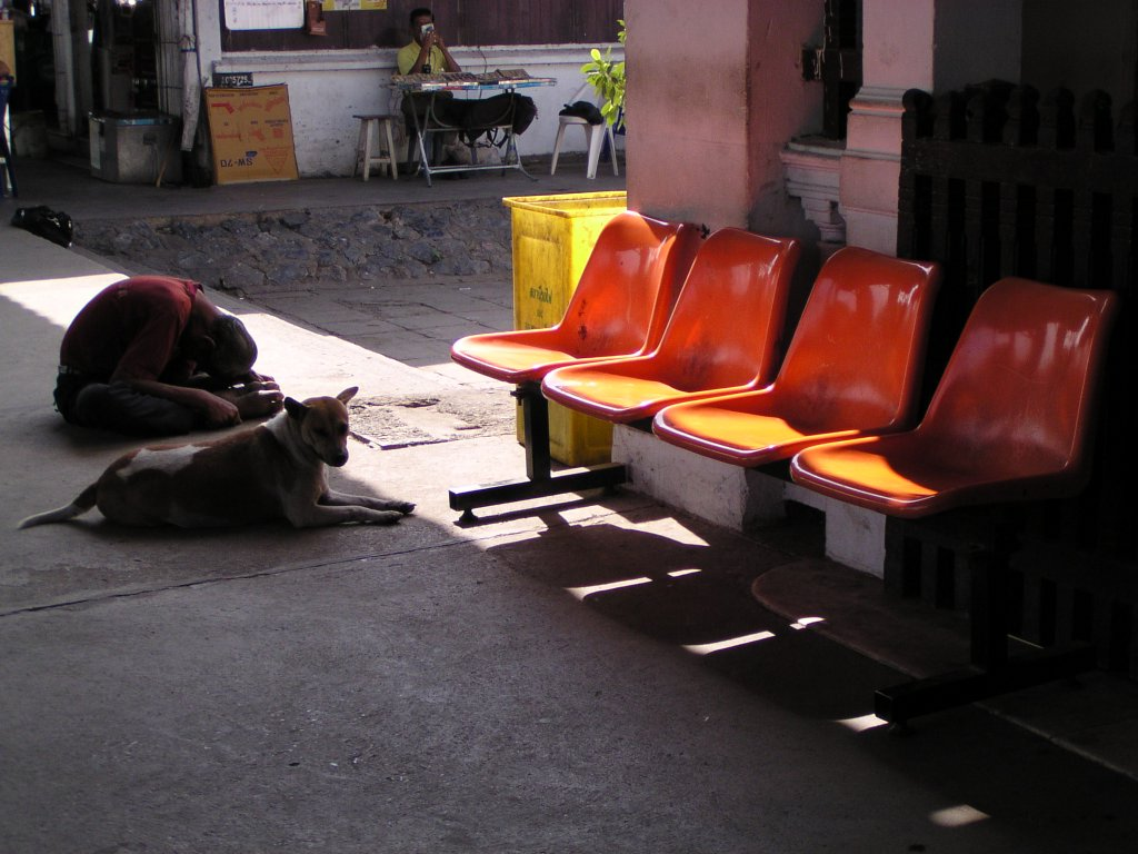 dog, man and sun