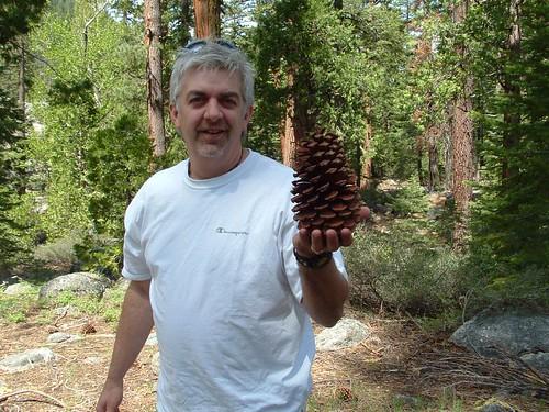 Redwood Pine Cone