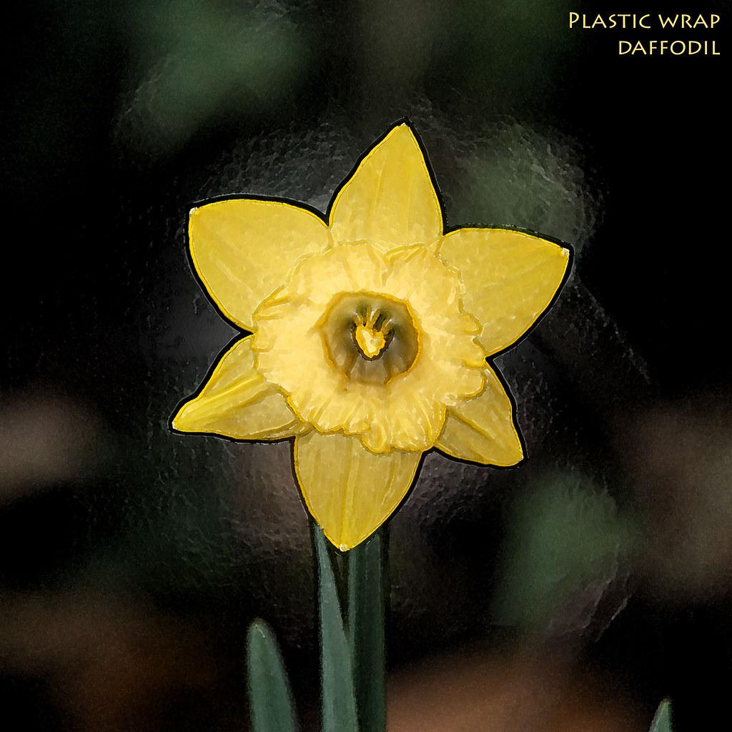 Daffodil   plastic wrap   PSE7