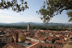 Lucca - Climbing the Tower
