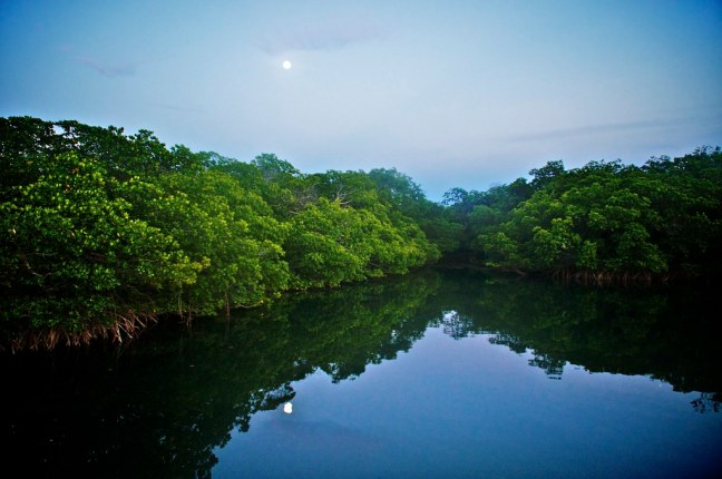 Moonrise over mangroves at Bahia Honda State Park