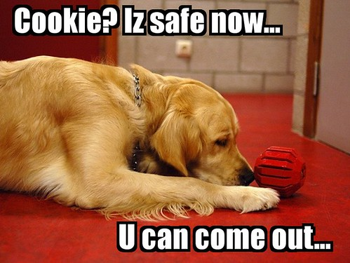 Valéas snuffelt aan de Kong en denkt 'Cookie? It's safe now.. You can come out...'