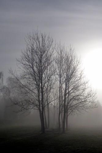 Sol afbrænder tåge