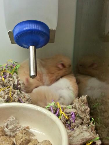 Cute Little Hamsters_1