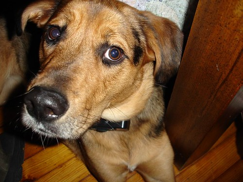 Friend's dog, Payton.