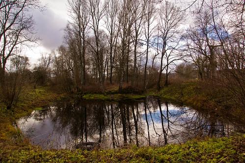 Tvenkinys | Pond