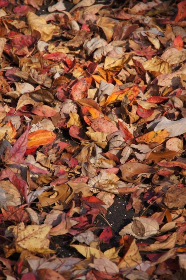 Fall in Delaware