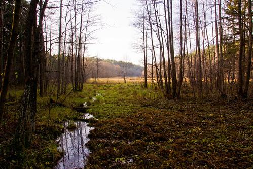 Upelis - pelkė