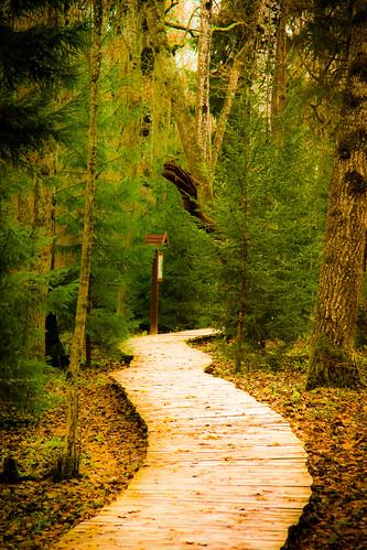 Pasakų miškas | Fairy Tale Forest