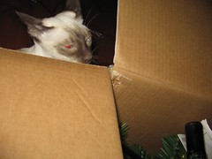 Wonder if I can go in the box with the tree?
