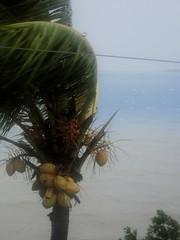 cyclone diwa