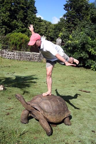 more tortoise figure
