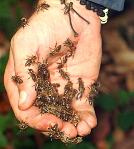 Mai et abeilles
