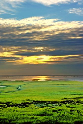 Kaomei Wetlands #2