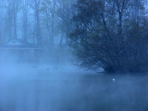 Mist on the Pond