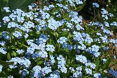 Sprinkle of blue