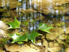 Foliage on Water