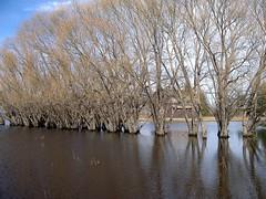 Wading trees