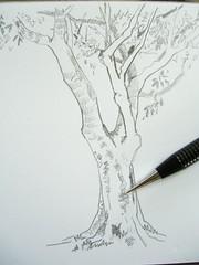 190406 Tree in Park 017b