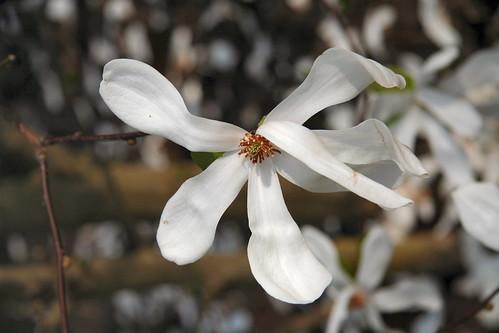 Flor rota