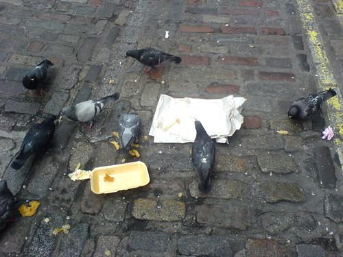 Pigeon throwaway