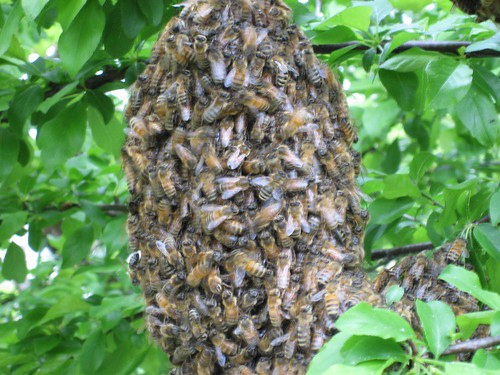 Swarm closeup