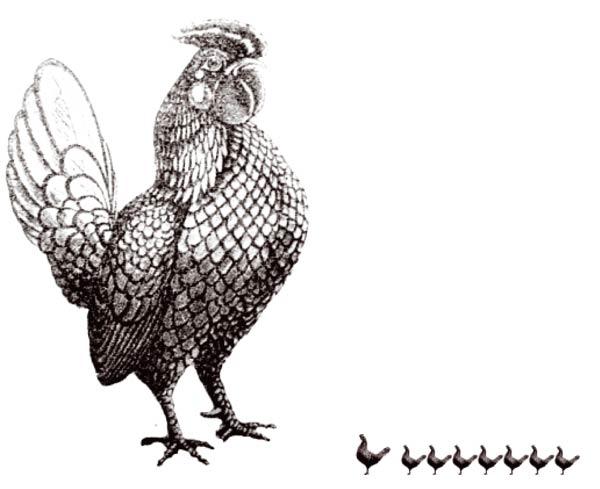 Cronache dal pollaio…
