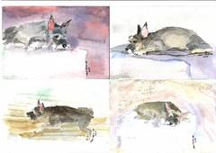 2004 (Sept) Max postcards