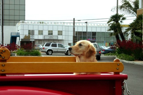 The Noble Dog in its Truck