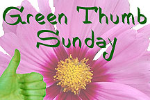 Join Green Thumb Sunday
