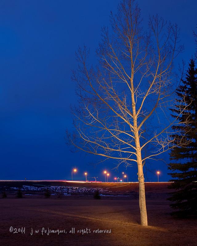 Poplar Light