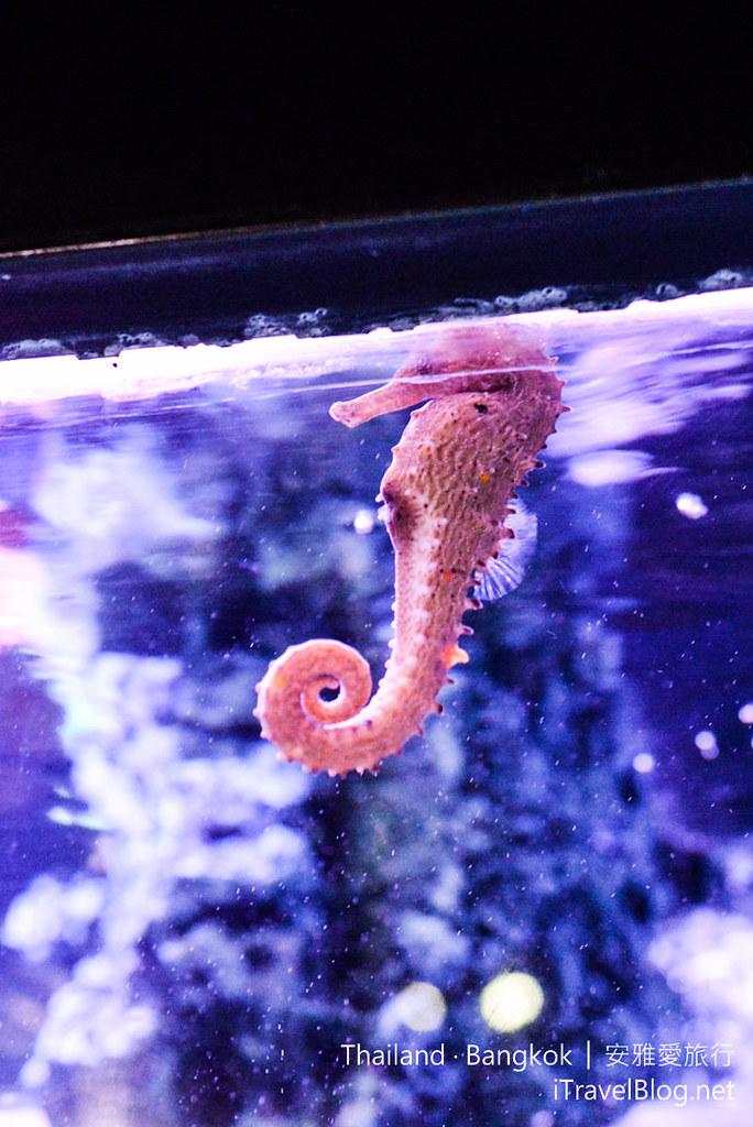 Siam Ocean World Bangkok 23