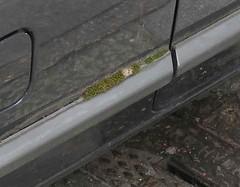 mossy car