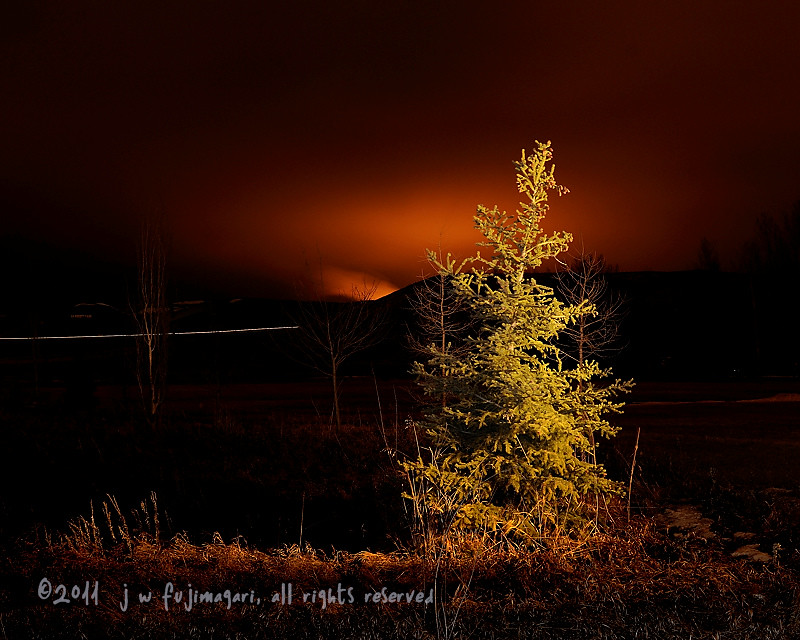 Spruce Light