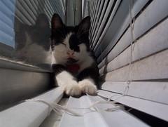 Pied on the windowsill